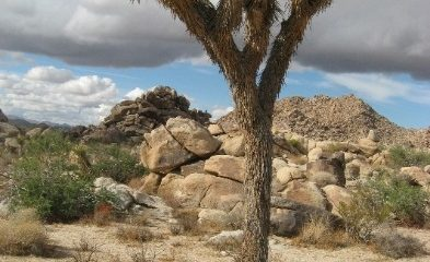 Image of Desert View Conservation Area