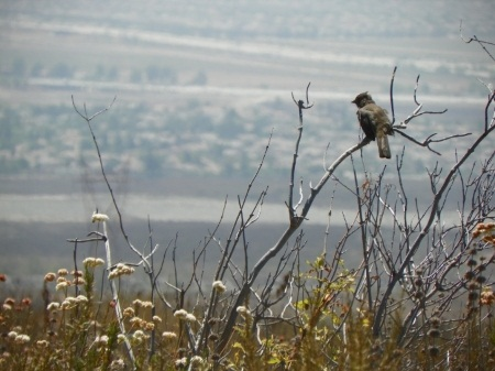 Image of North Etiwanda bird looking out