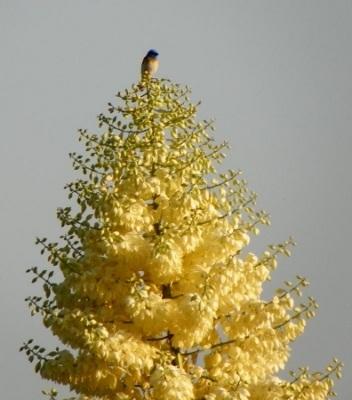 Image of North Etiwanda Tree and Bird